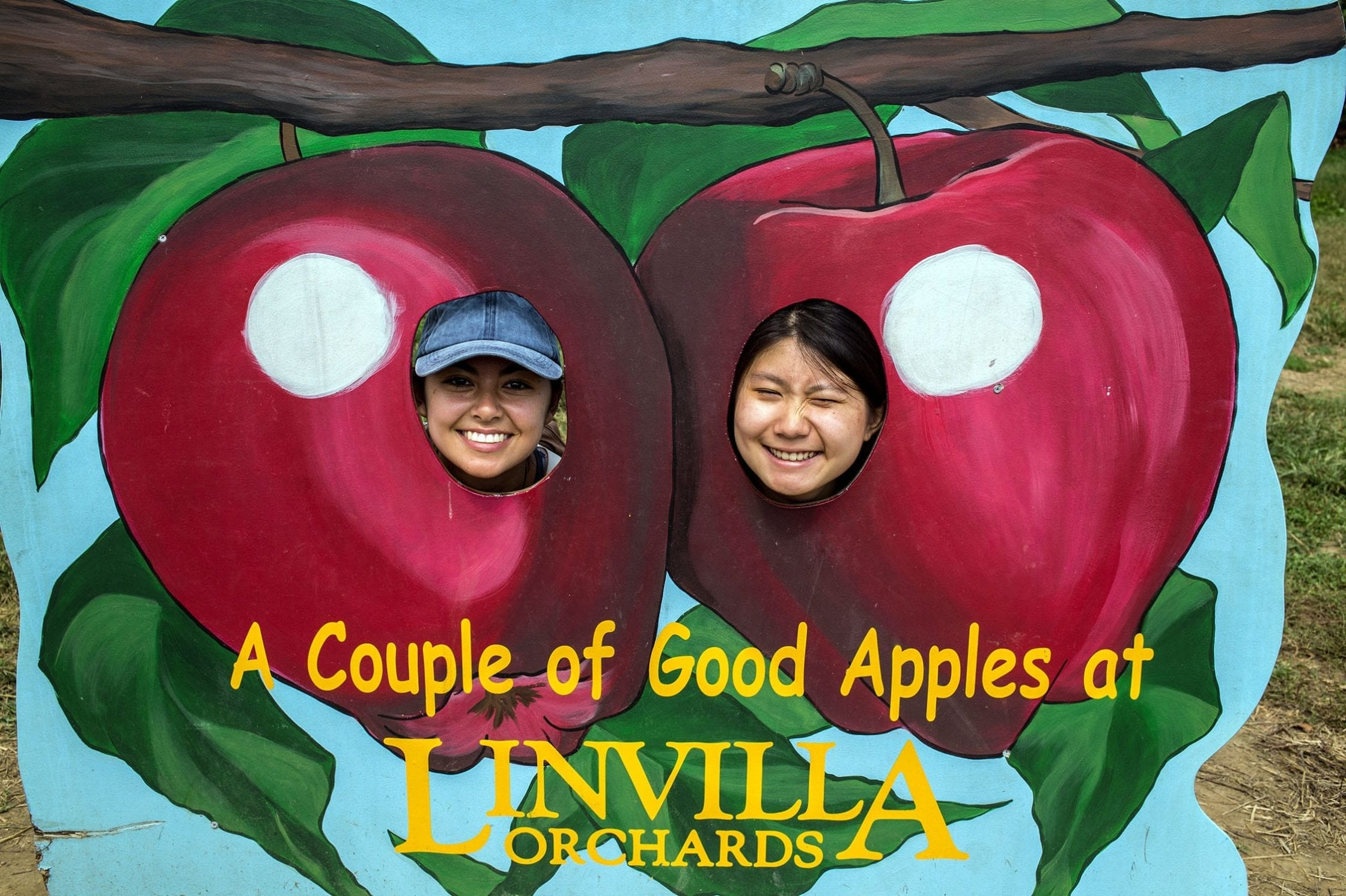Posing as apples at the orchard