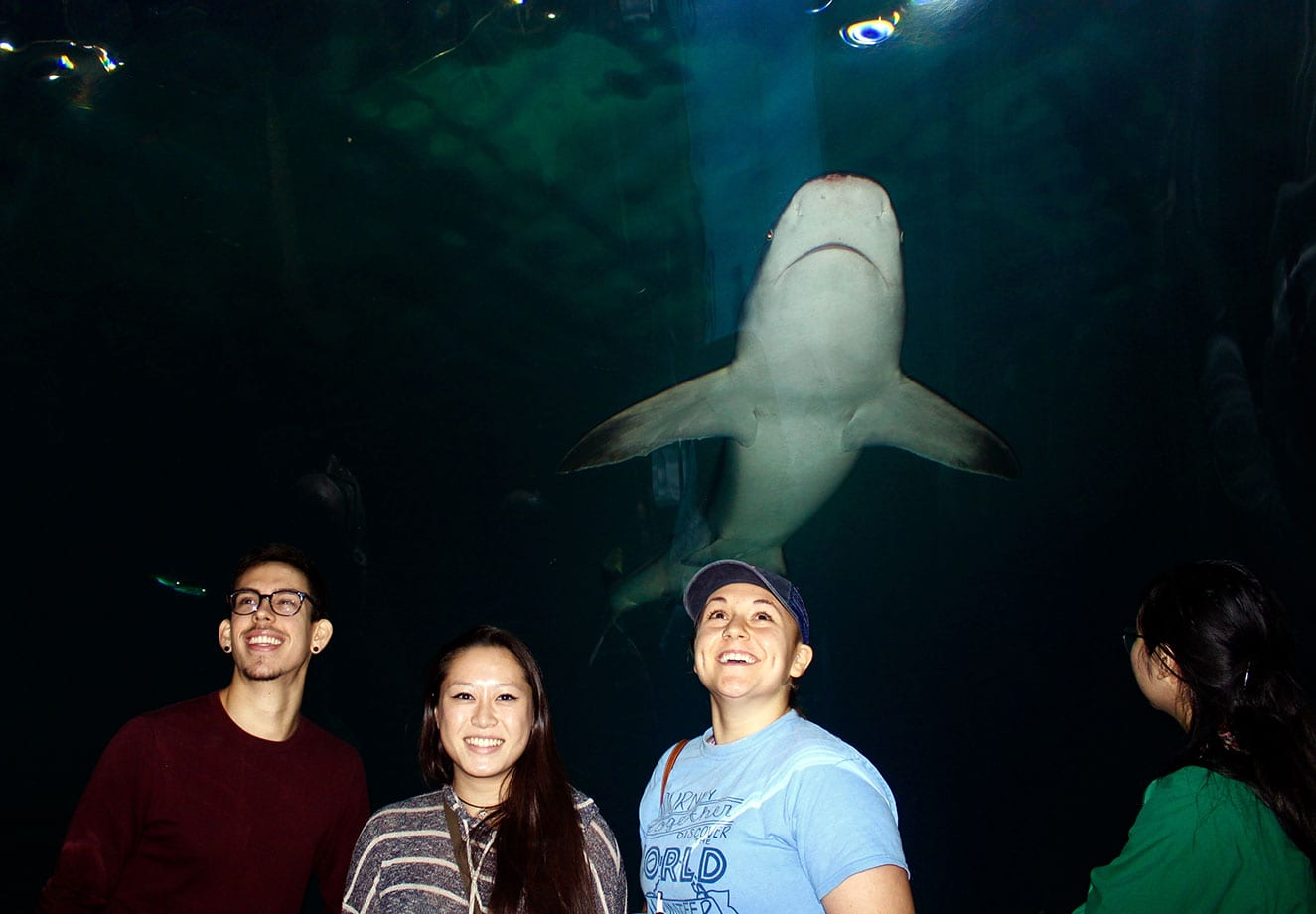 Students stand under a shark.
