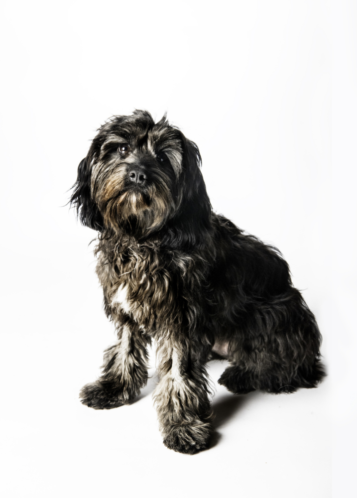 The shaggy black puppy sits on the white backdrop and looks directly into the camera
